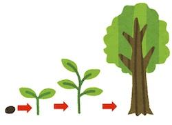京都の占い師HAMAが解説する木の成長