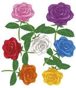 京都の占い師HAMAが解説する乙の薔薇