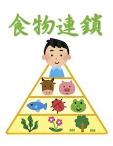 京都の占い鑑定師HAMAが解説する食物連鎖